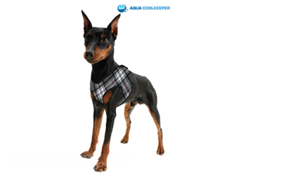 Aqua Cool Keeper Cooling Comfy Harness, scottish grey