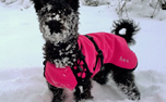 Pink Pepper HighTech Thermofleece Hundemantel IQO VXf